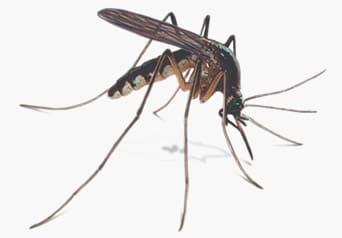 mosquito exterminators weston