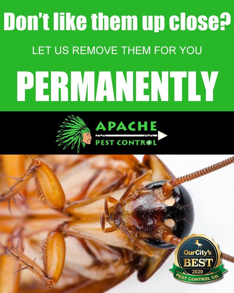 cockroach pest control weston