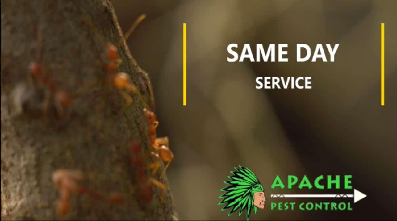 ants extermination services