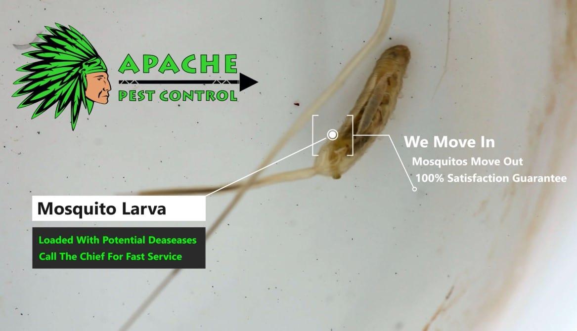 mosquito control weston