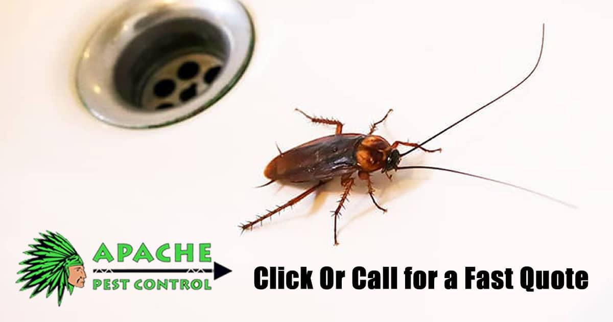 cockroach removal infestation pest control davie